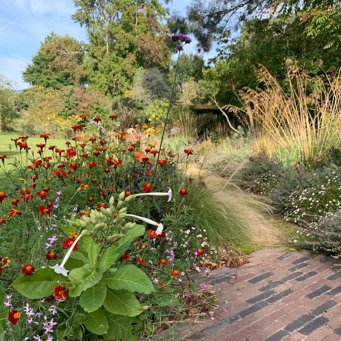 Back to my Autumn garden... still so much colour and interest... has to be my favourite season in the garden!