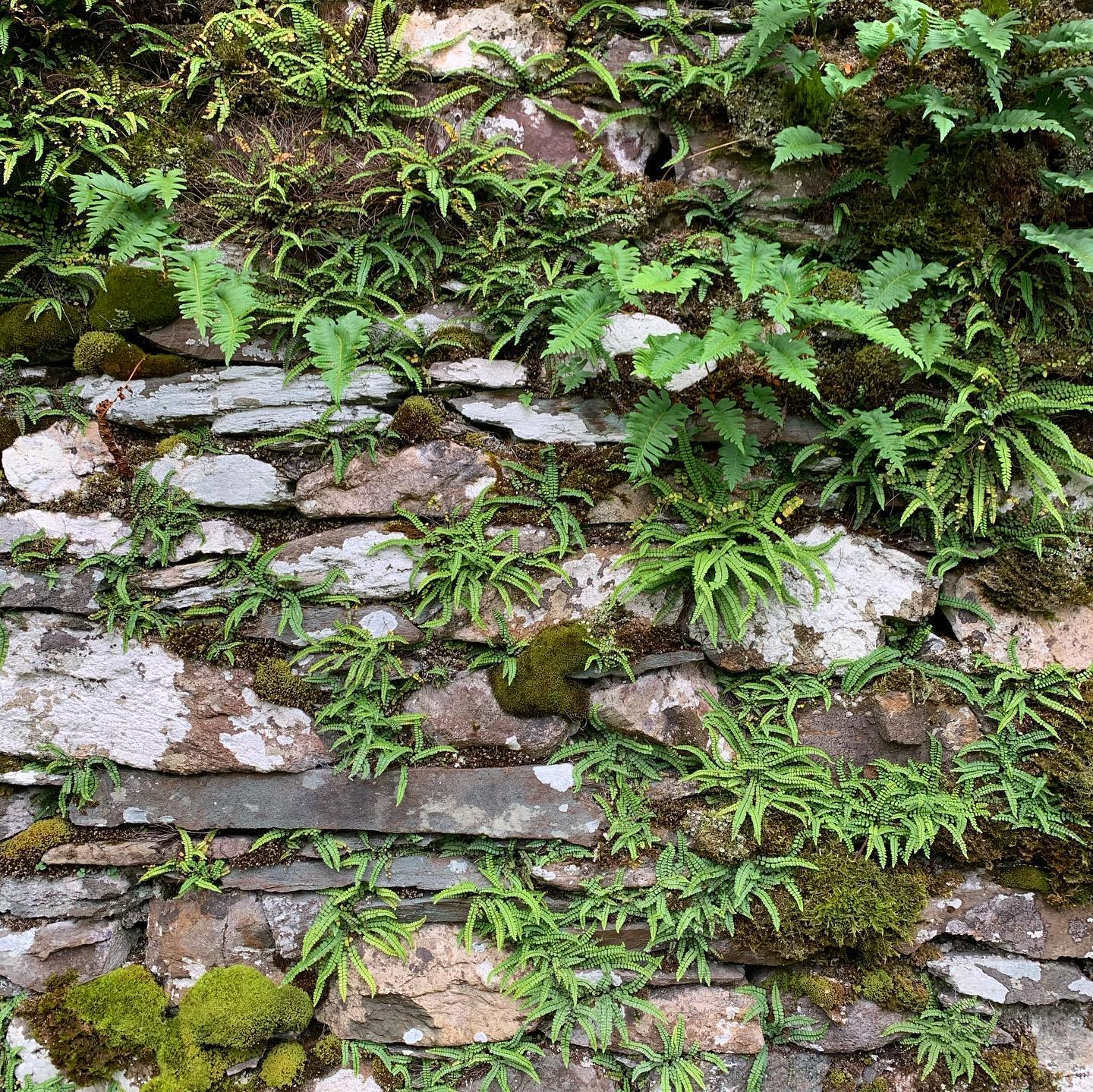 Living Walls style