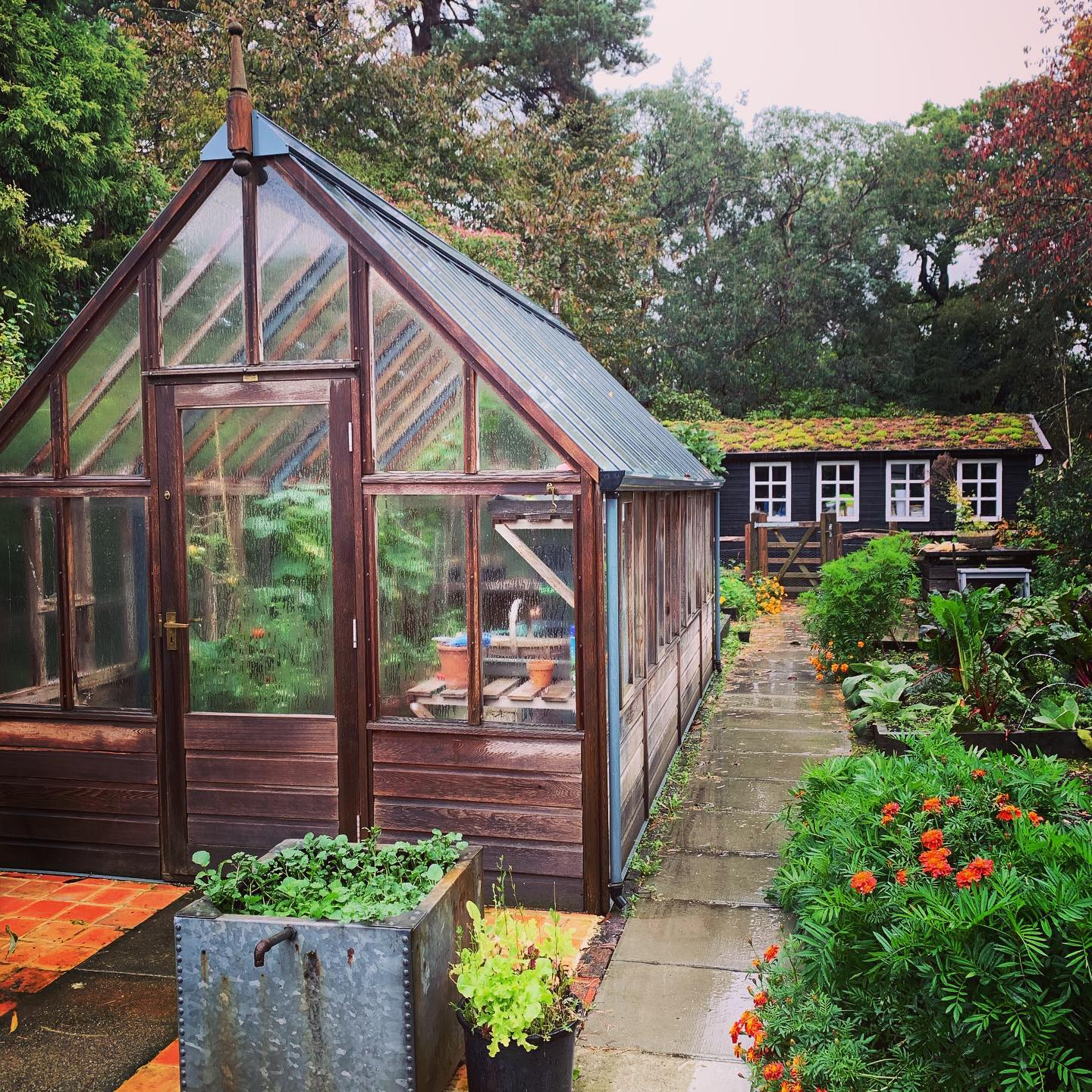 In my happy place on a wet Sunday sowing seeds, cafe del mar sunset sessions playing, steamy windows, mug of tea... Perfect! @gabrielash1 greenhouses