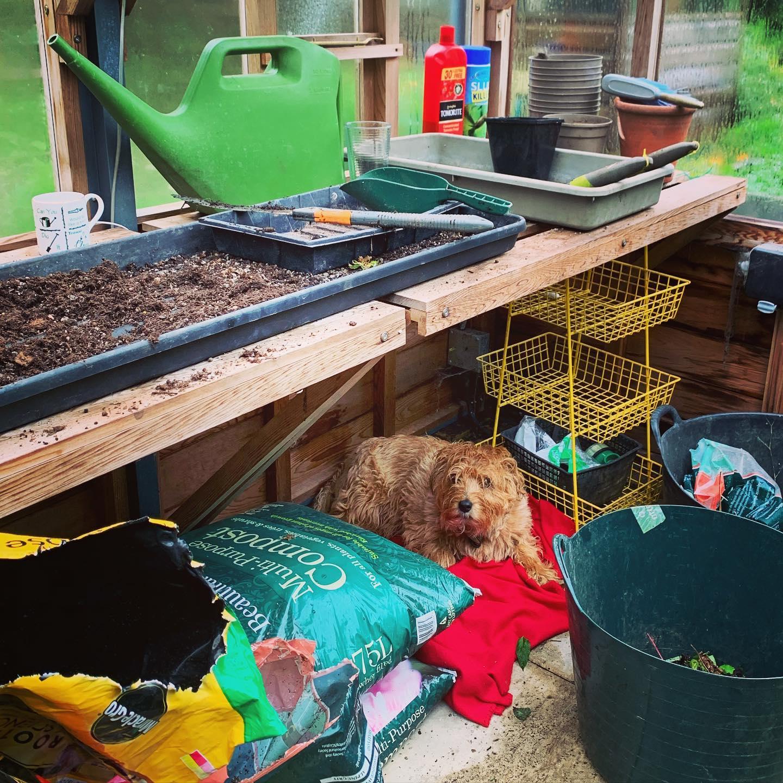 Wet pup greenhouse companion!