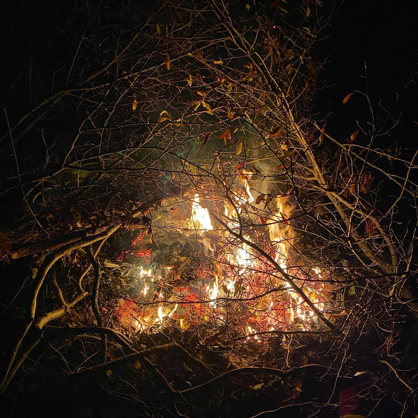 Bonfire night was a much smaller affair at home this year