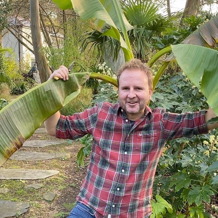 More Winter protection of tender plants... Musa basjoo, the Japanese banana.